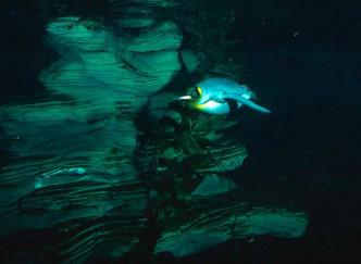 Océanopolis Brest, parc de découverte des océans